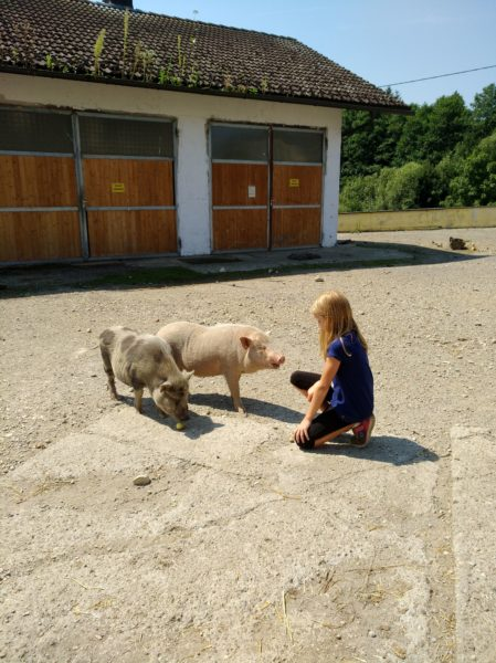 KindTierTreff – TIERISCHE Begegnungen am Gnadenhof MELCHERHOF